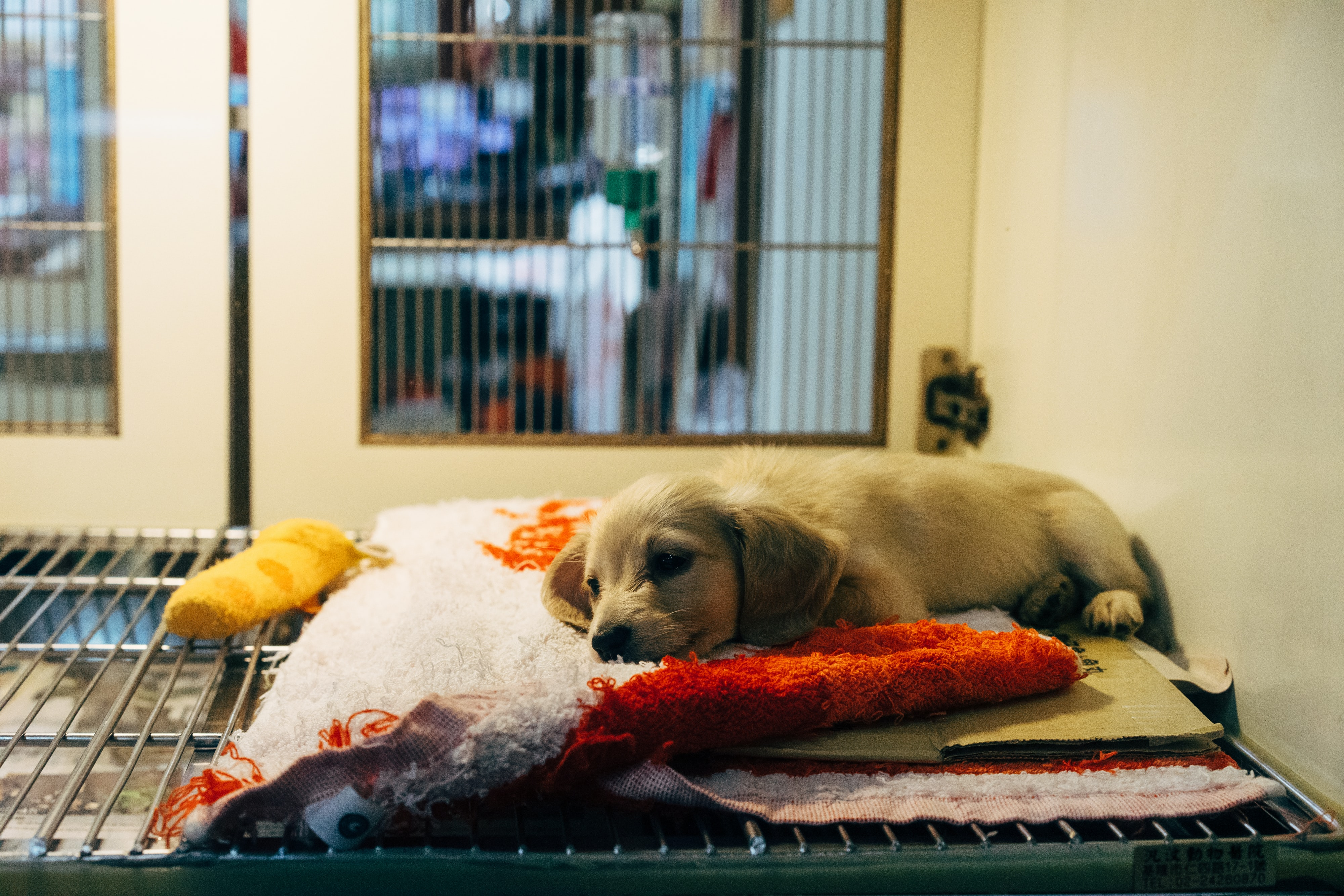 Animal Shelter Cleaning & Odor Elimination Tips